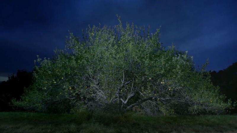 tree-darkness